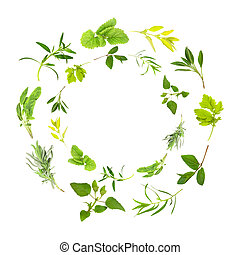 Herb Leaf Garlands - Herb leaf circles of lemon balm, golden...
