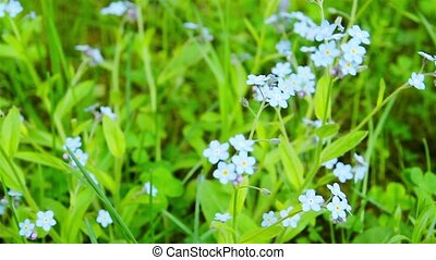 blue flowers, shooting slider