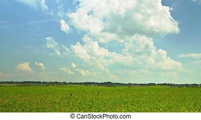 Rural Landscape, crane timelapse