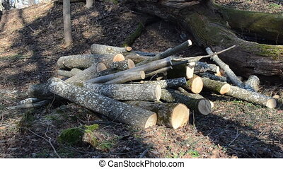 firewood pile logs - early spring morning forest worker...