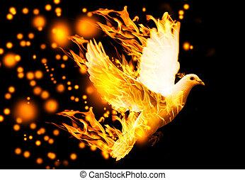 voando, Pomba, fogo