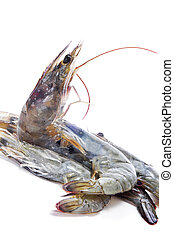 tiger prawns - some uncooked tiger prawns on a white...