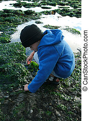 Young boy playing in a tidal pool
