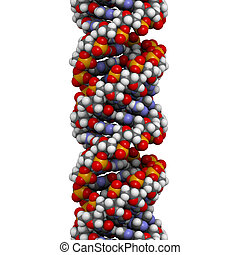 DNA (A-DNA conformation) structure. DNA is the main carrier...