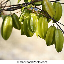 Carambola Or Starfruit On A tree