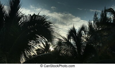 timelapse of sunlight shining through palm trees at sunet, mexican caribbean coast