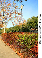 Park During Fall Season - Park during fall season showing...