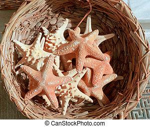 Sea stars .