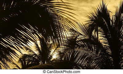 timelapse of sunlight shining through palm trees at sunet,...
