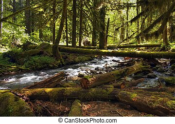 Forest Creek located in the gifford pinchot national forest...