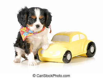 travelling with puppy - cavalier king charles puppy sitting...