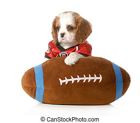 sports hound - cute cavalier king charles spaniel puppy...
