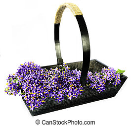 Garden Trug Filled with Blossom - Wooden gardening trug...