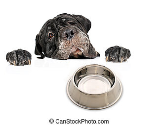 Hungry dog. - Dog isolated over white background.