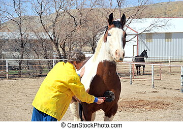 Female rancher. - Female rancher brushing her horse outside.