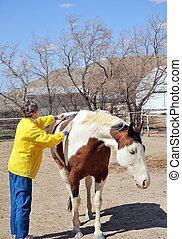 Female rancher - Mature female brushing her horse outside