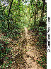 Rainforest trail - Tropical trail in dense rainforest,...