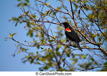Red wing bird in tree