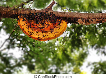 Beautiful honeybee hive being newly built by worker bees The...