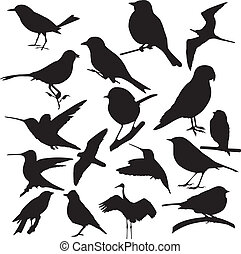 bird vector - bird, vector, silhouette isolate on white...