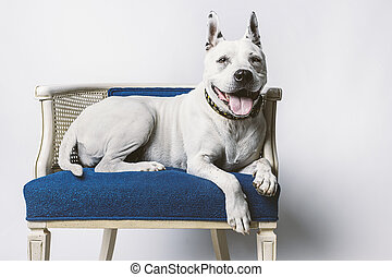 Cute Older Dog - Lovable Older Dog Resting on Blue Wicker...