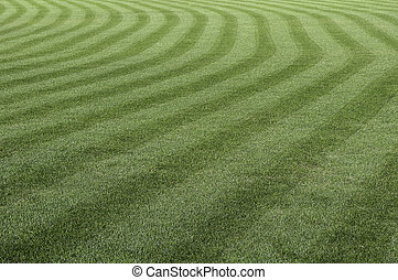 Green grass pattern.
