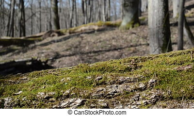 woman mossy tree trunk - women walked in the woods a mossy...