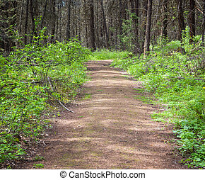 Nature hiking trail