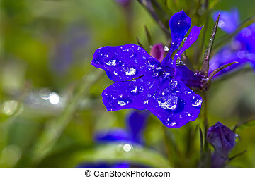 dewdrop - Plants macro your design