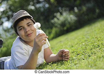 Souflant, criança, Dandelion, flor