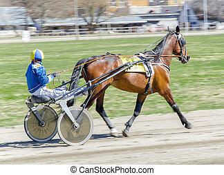 Couraça, correndo, correndo, cavalo, harnessed, peso...