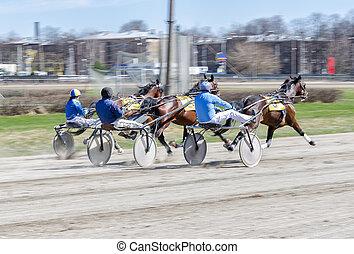 Couraça, correndo, correndo, cavalos, harnessed, peso...