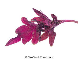red painted nettle leaf, isolated