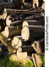 Woodpile September Afternoon - A woodpile on a September...