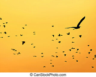 birds - migratory birds at sunset