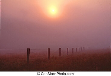 Misty Fenceline