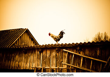cock on a roof - cock on a rural roof