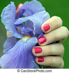 Female hand with pink nail polish holding iris