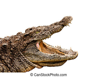 crocodile clipping path included - Clipping path included!...