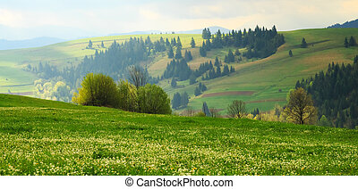 Spring early morning landscape with Multicolored diagonal in...