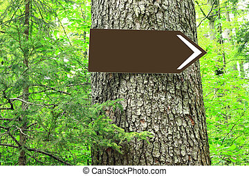 Blank direction sign on tree in forest