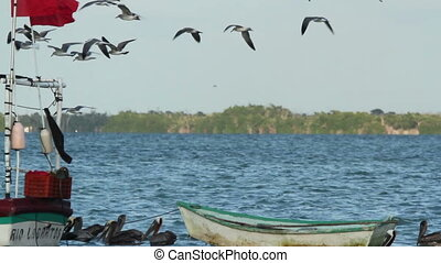 seagulls fly around a boat in the wind, ria largartos, mexico