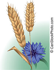 spikelets and cornflower. using mesh and gradient