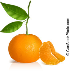 Fresh tangerine fruits with green leaves. - Photo-realistic...
