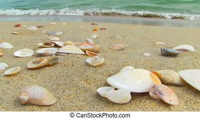 Nice sea shells on the sandy beach - sea shells on the beach