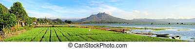 Volcano Batur - Landscape with onion fields, lake and...