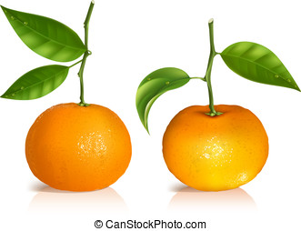 Fresh tangerine fruits with green leaves. Photo-realistic...