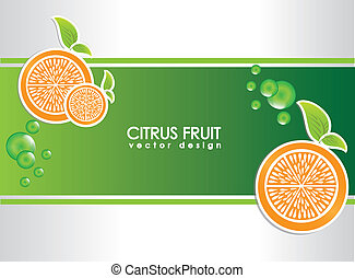 citrus fruit over gray background vector illustration