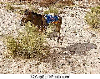 Bedouin donkey near Monastery in Petra, Jordan