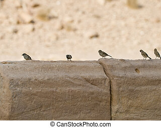 Birds line up - Small birds on the wall in Petra, Jordan